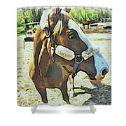 Horse Point Of View Shower Curtain