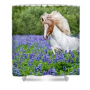 Horse Running By Lupines. Purebred Shower Curtain