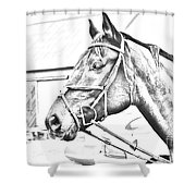 Horse Sketch Shower Curtain
