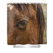 Horse Tear Shower Curtain