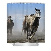 Horse With No Name Shower Curtain