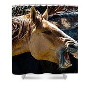Horse Yawn Shower Curtain