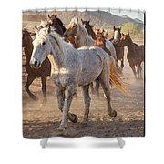 Horses 7 Shower Curtain