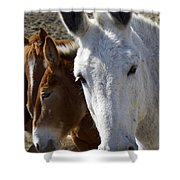 Horses And Mules   #0757 Shower Curtain