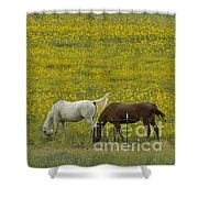 Horses And Wildflowers   #8511 Shower Curtain