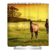 Horses At Sunset Shower Curtain