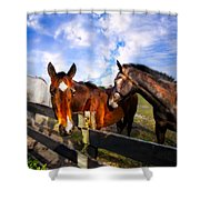 Horses At The Fence Shower Curtain
