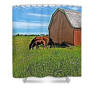 Horses By A Barn Along Confederation Trail-pei Shower Curtain