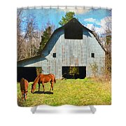 Horses Call This Old Barn Home Shower Curtain