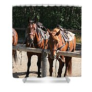 Horses Glacier National Park Montana Shower Curtain