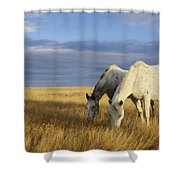Horses Grazing In Cypress Hills Shower Curtain