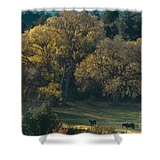 Horses In A Backlit Field With Fall Colored Trees Sedo Shower Curtain