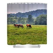 Horses In A Field 2 Shower Curtain