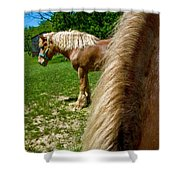 Horses In Meadow Shower Curtain