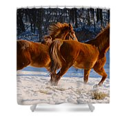 Horses In Motion Shower Curtain