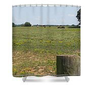 Horses In The Field Shower Curtain