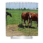 Horses In The Pasture Shower Curtain