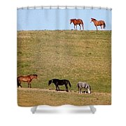 Horses Of Hayward Shower Curtain