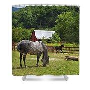 Horses On A Farm Shower Curtain