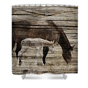 Horses On Wood Shower Curtain