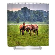 Horses Socialize Shower Curtain