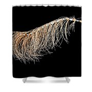Horsetail On Black Shower Curtain