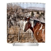 Horsing About V3 Shower Curtain