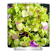 Hortensia With Touch Of Pink Shower Curtain