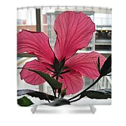 Hospital Hibiscus Shower Curtain