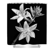 Hosta Flowers In Black And White Shower Curtain