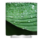Hosta Leaves Shower Curtain