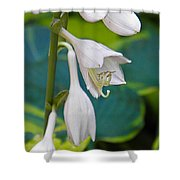 Hosta Shower Curtain