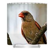 Hot Cardinal Shower Curtain