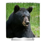 Hot Day In Bear Country Shower Curtain