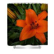 Hot Orange Lily  Shower Curtain