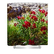Hot Pink Bushes Shower Curtain