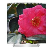 Hot Pink Camellia Shower Curtain