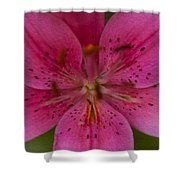Hot Pink Close Up Shower Curtain