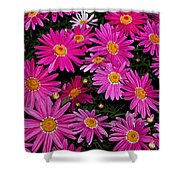 Hot Pink Daisies Shower Curtain