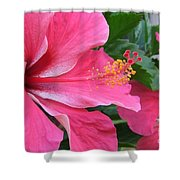 Hot Pink Hibiscus 2 Shower Curtain