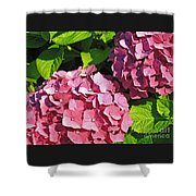 Hot Pink Hydrangea Shower Curtain