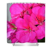 Hot Pink In February Shower Curtain