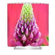 Hot Pink Lupine Shower Curtain