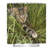 House Cat Hunting In Grass Germany Shower Curtain