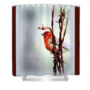 House Finch - Finch 2241-004 Shower Curtain