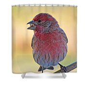 House Finch II Shower Curtain