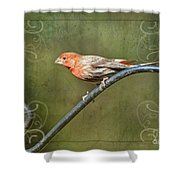 House Finch On Guard II Shower Curtain