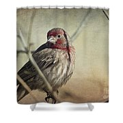 House Finch Two Shower Curtain