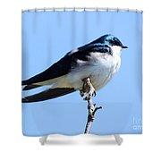 House Martin Shower Curtain