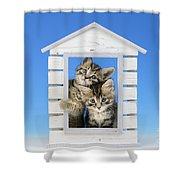 House Of Kittens Ck528 Shower Curtain